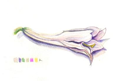 flormini