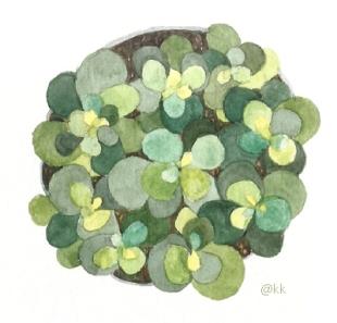 plantapoteclaraemcimap