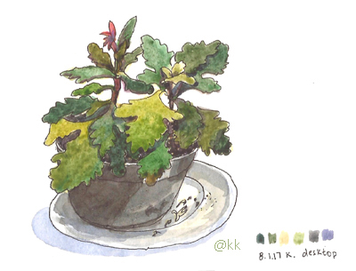 plantapotepratop2
